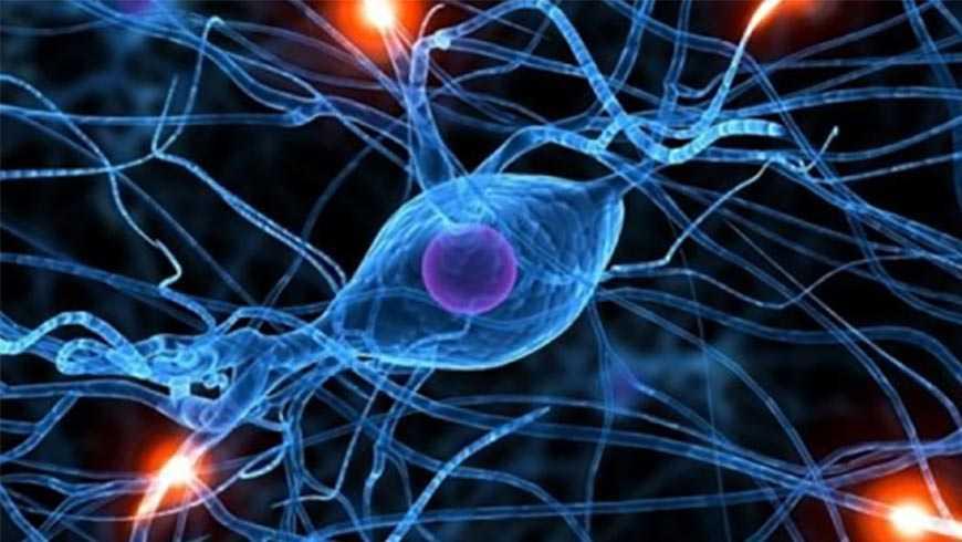 Introducción a la rehabilitación cognitiva